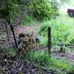 A new life for old fence that skirts the well head.